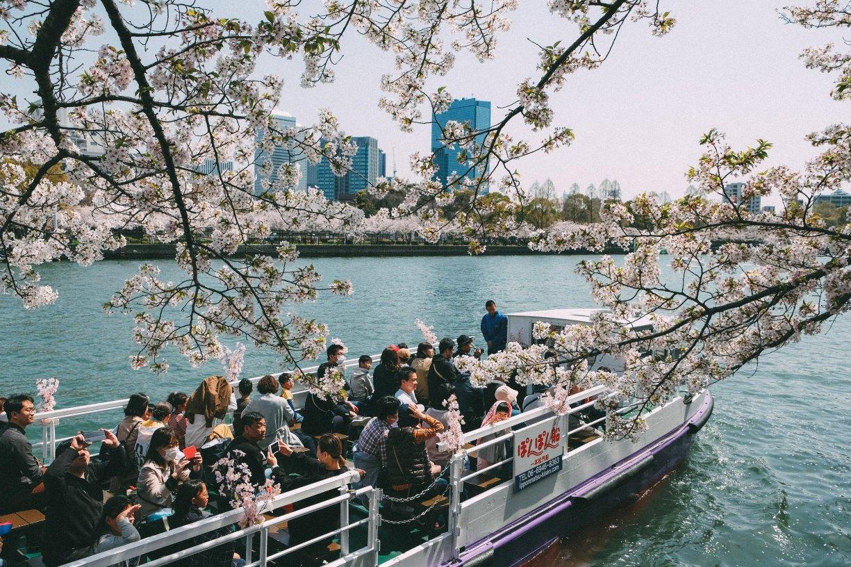 Sakura in Tenma, Osaka