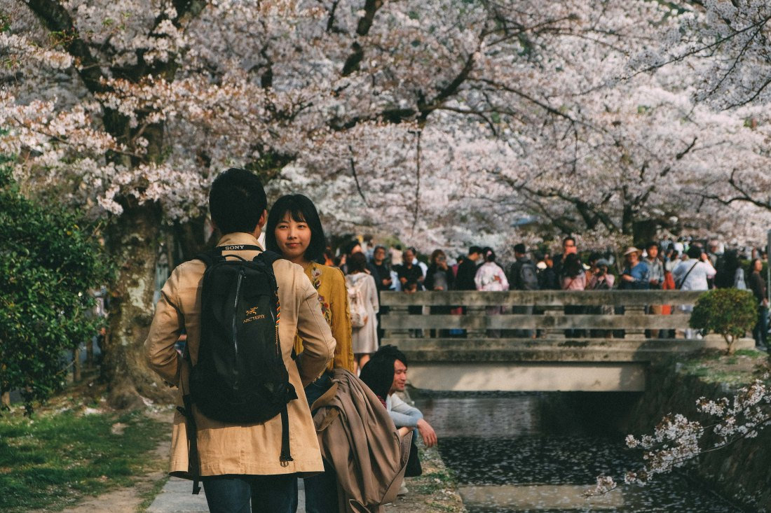 Sakura In Kyoto During Spring